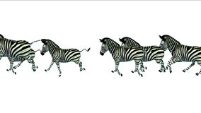 funzionamento animale di migrazione della siluetta degli asini del cavallo delle zebre del gruppo 4k, pascolo dell'Africa video d archivio