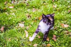 Funzionamento dai capelli rossi del gatto attraverso l'erba Immagini Stock