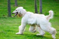 Funzionamento del cane fotografia stock