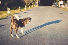 Funzionamento del cane di tre gambe sulla strada Immagine Stock Libera da Diritti
