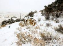 Funzionamento del cane in montagne di Snowy di Denver Colorado Fotografia Stock