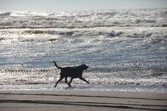 Funzionamento del cane nelle onde Fotografia Stock