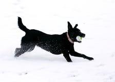 Funzionamento del cane nero Fotografia Stock Libera da Diritti