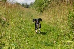 Funzionamento del cane su un sentiero per pedoni Immagine Stock Libera da Diritti