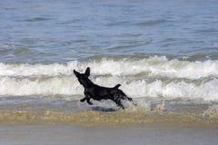 Funzionamento del cane sulla spiaggia Immagine Stock Libera da Diritti