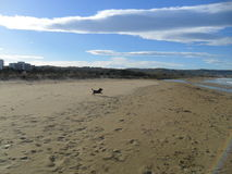 Funzionamento del cane sulla spiaggia Immagini Stock Libere da Diritti
