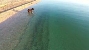 Funzionamento del cane verso la macchina fotografica nel mare archivi video