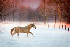 Funzionamento del cavallo Immagine Stock