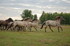 Funzionamento del cavallo Immagine Stock Libera da Diritti