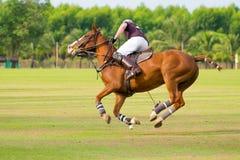 Funzionamento del cavallo Fotografia Stock Libera da Diritti