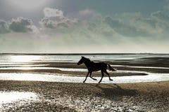 Funzionamento del cavallo alla spiaggia Immagine Stock Libera da Diritti