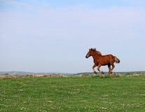 Funzionamento del cavallo sul campo Fotografie Stock Libere da Diritti