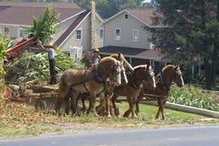Funzionamento del coltivatore e del figlio dei Amish Immagini Stock Libere da Diritti