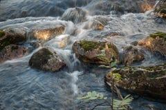 Funzionamento del fiume della foresta fotografia stock libera da diritti
