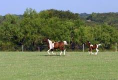 Funzionamento del foal e della cavalla immagine stock libera da diritti