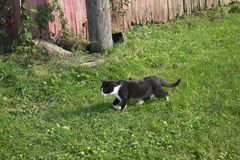 Funzionamento del gattino nell'erba fotografie stock libere da diritti