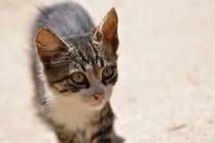 Funzionamento del gatto Fotografia Stock Libera da Diritti