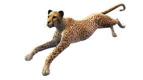 Funzionamento del ghepardo, animale su fondo bianco Fotografie Stock Libere da Diritti