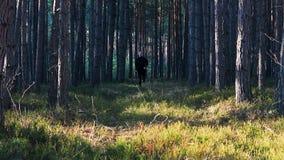 Funzionamento del giovane in foresta dalla parte anteriore archivi video
