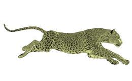Funzionamento del leopardo isolato Fotografie Stock Libere da Diritti