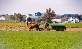 Funzionamento del padre & del figlio dell'azienda agricola di Amish Immagine Stock