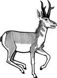Funzionamento dell'antilope di Pronghorn illustrazione vettoriale