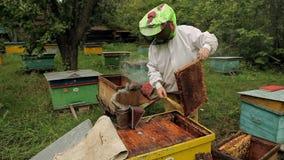 Funzionamento dell'apicoltore archivi video