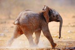 Funzionamento dell'elefante del bambino fotografia stock