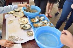 Funzionamento della donna sull'estrazione delle perle dalle conchiglie di ostrica Fabbrica vietnamita vicino alla baia di lunghez fotografia stock