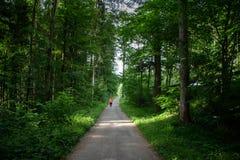 Funzionamento della giovane donna lungo il percorso attraverso la foresta verde Fotografia Stock