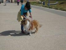 Funzionamento della natura del cane Fotografie Stock