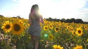 Funzionamento della ragazza sul giacimento giallo del girasole con il chiarore del sole a fondo La donna irriconoscibile in vesti archivi video