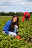 funzionamento di estate delle fragole di raccolto della ragazza del campo Fotografia Stock Libera da Diritti