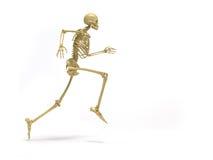 Funzionamento di scheletro Immagine Stock