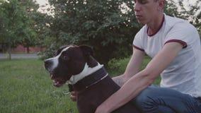 Funzionamento e salto di Staffordshire bull terrier di inglese archivi video