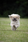 funzionamento felice del cane Immagini Stock