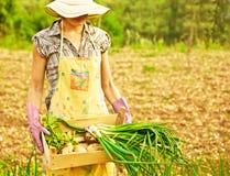 Funzionamento felice del giardiniere Immagini Stock