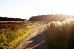 Funzionamento sul tramonto Fotografia Stock