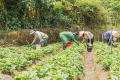 Funzionamento vietnamita dell'agricoltore Fotografia Stock