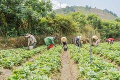 Funzionamento vietnamita dell'agricoltore Fotografie Stock Libere da Diritti