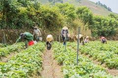 Funzionamento vietnamita dell'agricoltore Immagine Stock Libera da Diritti