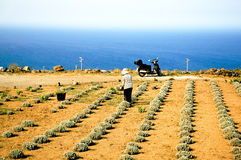 Funzionando nel campo in Sicilia Fotografia Stock Libera da Diritti