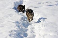 Funzionando nella neve dà il piacere Fotografie Stock