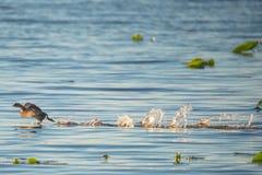 Funzionando sull'acqua Fotografie Stock Libere da Diritti