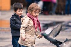 Funzionare intorno ed inseguire gli uccelli Immagini Stock Libere da Diritti