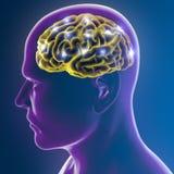 Funzioni della sinapsi dei neuroni del cervello illustrazione di stock