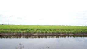 Funzioni fra le risaie? fotografie stock