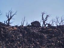 Fuochi in Catalogna 2012: Disastro naturale Fotografie Stock Libere da Diritti