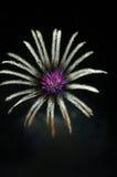 Fuochi d'artificio che si illuminano nel reticolo floreale alla notte fotografia stock
