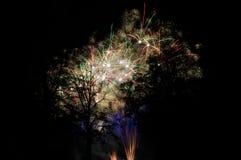 Fuochi d'artificio dietro gli alberi fotografia stock